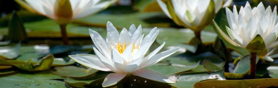 Mind Calm Meditation